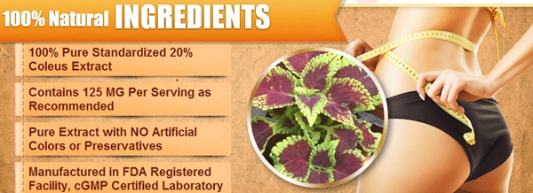 Forskolin Fuel Ingredients